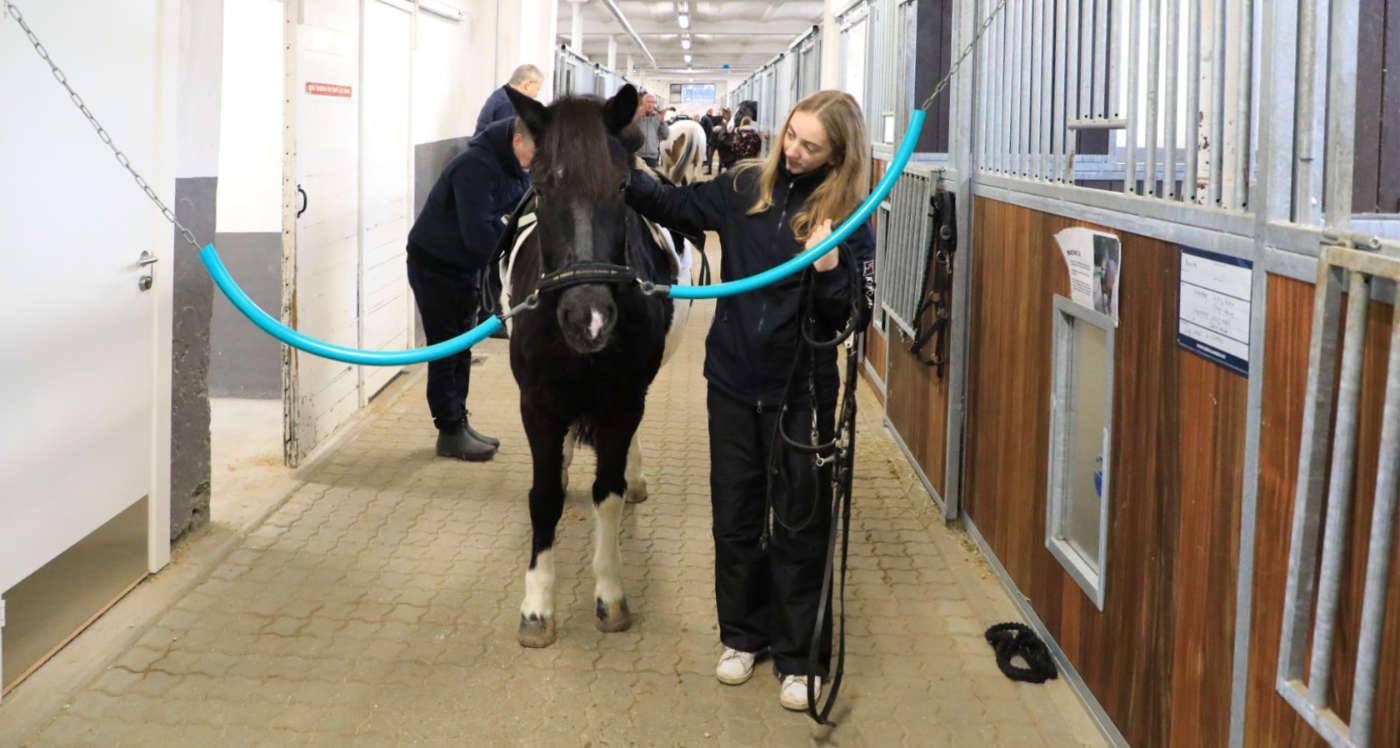 gek-gentofte-rideklub-ponyer-heste-3