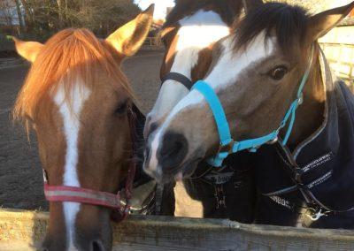 gek-gentofte-rideklub-ponyer-heste
